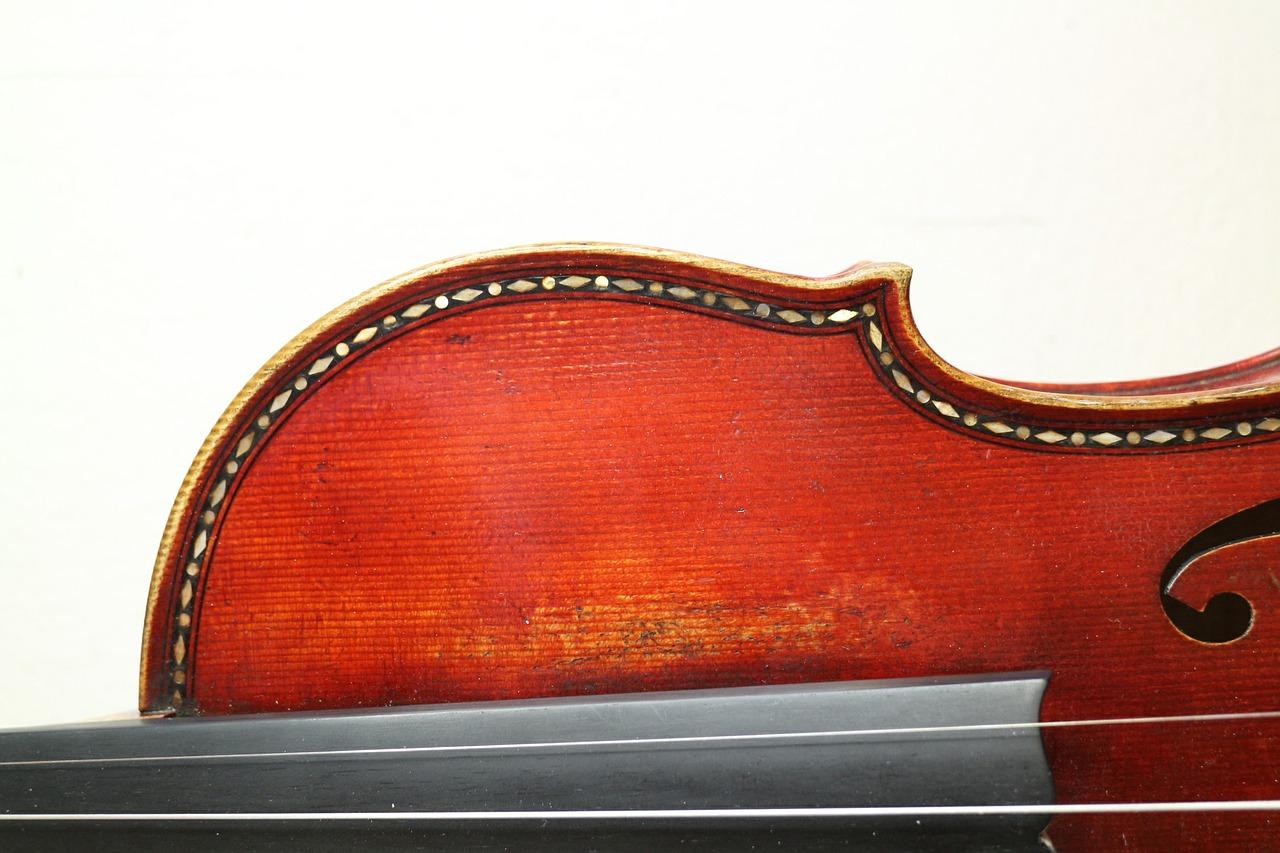 bois violon