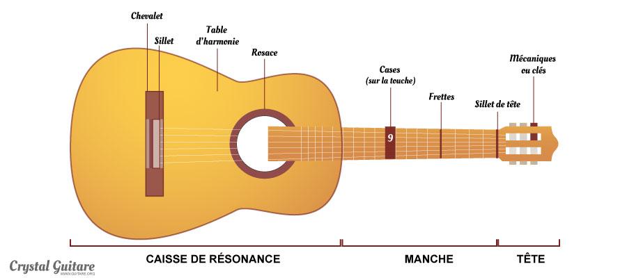 anatomie guitare